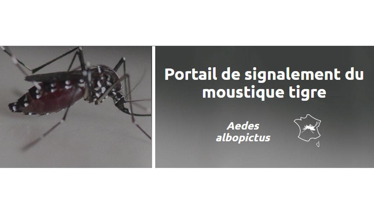 Moustique Tigre 2020